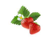 Strawberry. Berries with a flower and leaf Stock Photo