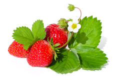 Strawberry. Red strawberry with green leaf isolated on white stock photography