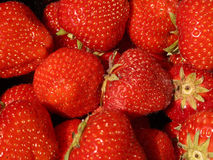 Strawberry. Ripe juicy strawberrys reading for eating Royalty Free Stock Photography