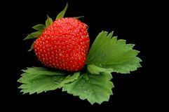 Strawberry. Shot on black royalty free stock photography