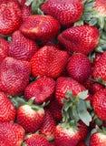 Strawberry. Macro shot of several fresh strawberries Royalty Free Stock Photos