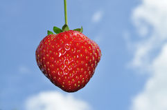 Strawberry. On the blue sky background Stock Photos