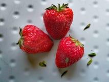 农庄大棚鲜草莓 stock image