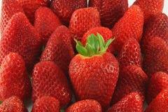 Strawberry. Many large fresh ripe strawberries Royalty Free Stock Photos