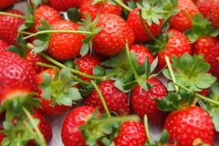 Strawberry. Closeup of strawberry in a plantation Stock Images