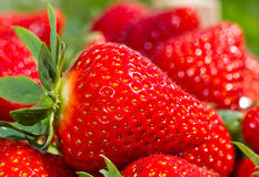 Strawberry. A red Strawberry with some more Strawberries Stock Photography
