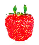 Strawberry. Isolated on white background Stock Photos