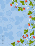 Strawberry. Floral background with a strawberry. Vector illustration Stock Images