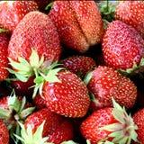 Strawberry. Harvest royalty free stock photo
