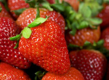 Strawberry. Single well formed strawberry with leaves in group of strawberries Royalty Free Stock Images