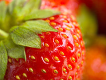 Strawberry. Fresh delicious strawberry bright indoor Royalty Free Stock Image
