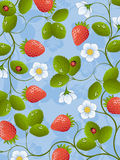 Strawberry. Floral background with a strawberry. Vector illustration Royalty Free Stock Photo
