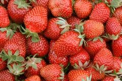 Strawberry. Fresh ripe strawberries.Closeup shot royalty free stock photos