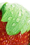 Strawberry. Close up of a strawberry with water drops Royalty Free Stock Photo
