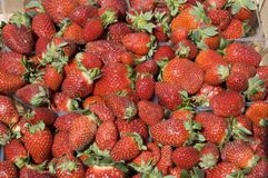 Strawberry. Sale of a strawberry on a market Royalty Free Stock Photo