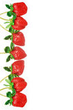 Strawberry. Royalty Free Stock Photos