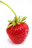 Strawberry. Red strawbery on white backgound Stock Photography