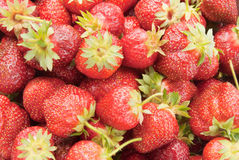 Strawberry. Organic strawberries with leaves and stems attached Stock Image
