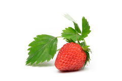 Free Strawberry Stock Image - 3355801