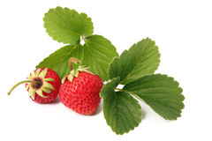 Strawberry. Isolated on white background Stock Images