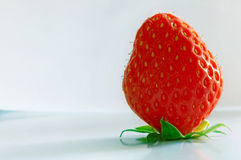 Strawberry. A strawberry with crossed treatment on a polar background royalty free stock photo