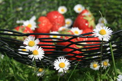 Strawberry. S in a bowl on a green summer meadow Stock Image
