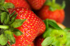 Strawberry. Fresh Strawberry in glass bowl Stock Photography