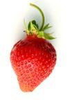 Strawberry. Off a vine at a farm Stock Image