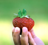 Strawberry. A little girl holding a strawberry Royalty Free Stock Image