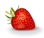 Strawberry. Detailed vector illustration for best prints and other uses Royalty Free Stock Image