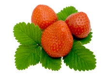 Strawberry. Berry and strawberry leaves isolated on a white background Royalty Free Stock Photos