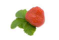 Strawberry. Berry and strawberry leaves isolated on a white background Royalty Free Stock Photo