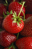 Strawberry. Pile of strawberries Royalty Free Stock Photo