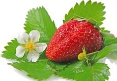Strawberry. Green leaves and blossom Stock Photo
