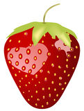 Strawberry. Wonderful detalised strawberry with seeds over white background royalty free illustration