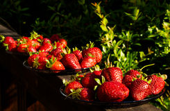 Strawberry abundance Royalty Free Stock Image