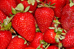 Strawberry. Agriculture brightly candy dessert diet food fresh freshness fruit gourmet health stock images
