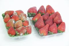 Strawberry food agriculture isolated mold delicious healthful fruit Sao Paulo Brazil. Strawberry agriculture isolated mold delicious healthful fruit Sao Paulo stock photography