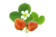 Free Strawberry And Leaf Stock Image - 9403811