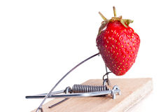 Strawberry as a bait in mousetrap Royalty Free Stock Images