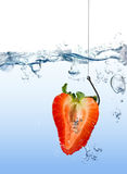 Strawberry as fishing lure on fishing hook under water Stock Photos