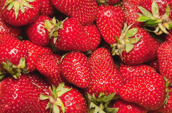 Strawberry background. A pile of big fresh strawberries Stock Photography