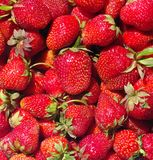 Strawberry.background. Many ripe red strawberry close up as background Stock Image