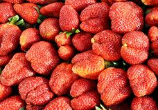 Strawberry background. Royalty Free Stock Photography