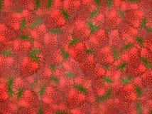 Strawberry background royalty free stock image