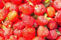 Strawberry background Stock Photography
