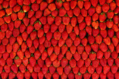 Strawberry background Stock Image