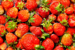 Strawberry background Stock Photos