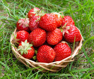 Strawberry in a basket. On a grass Royalty Free Stock Image
