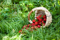 Strawberry in basket Stock Images